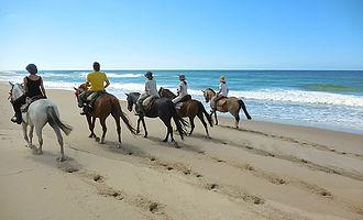 Eco Equus cabalgatas y Talleres con Caballos